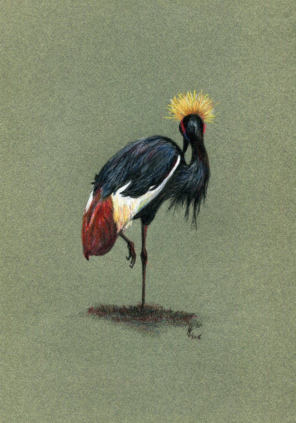 94b Maike Claussen, Crowned Crane, Coloured pencil on paper