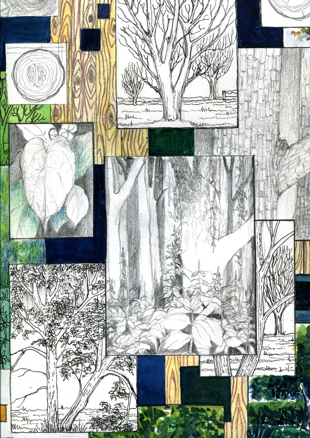 42b Peter Hoal, Trees, Mixed media on paper