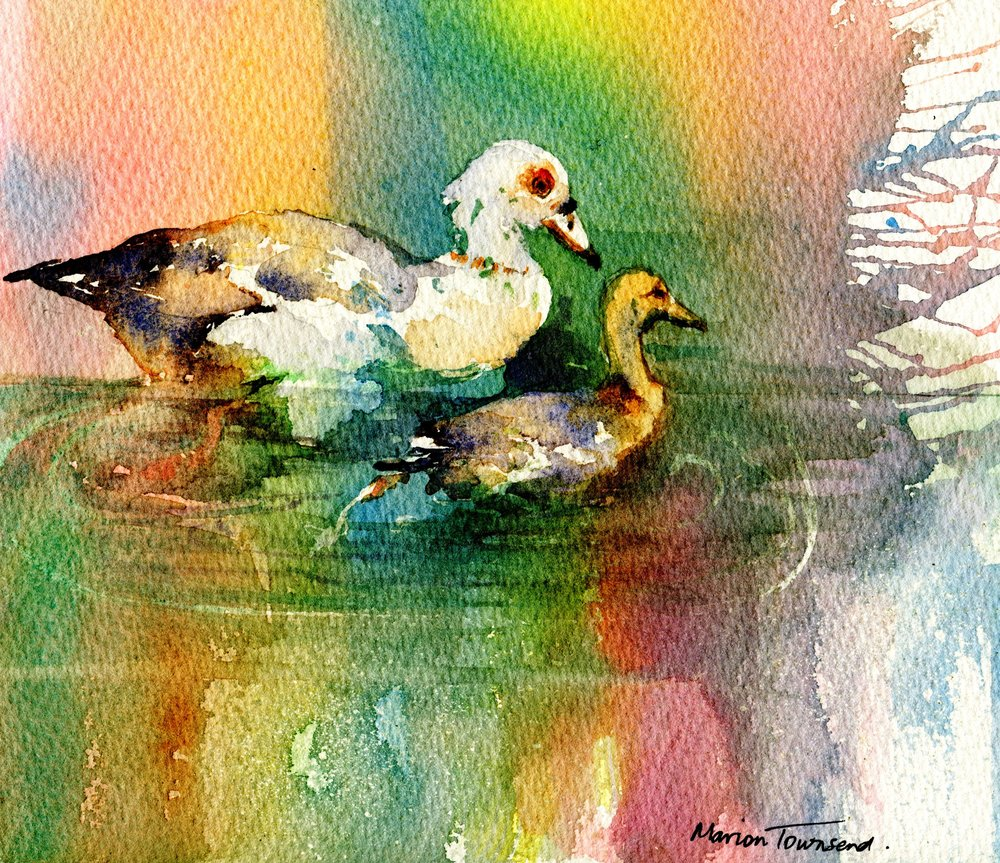 55a Marion Townsend,  Goose and Gosling, Watercolour on paper