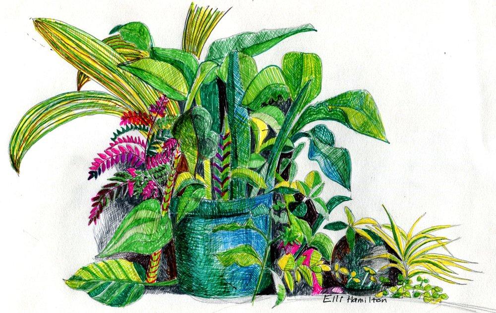 61a Elenor Hamilton, Study in Green, Fine liner pen on paper