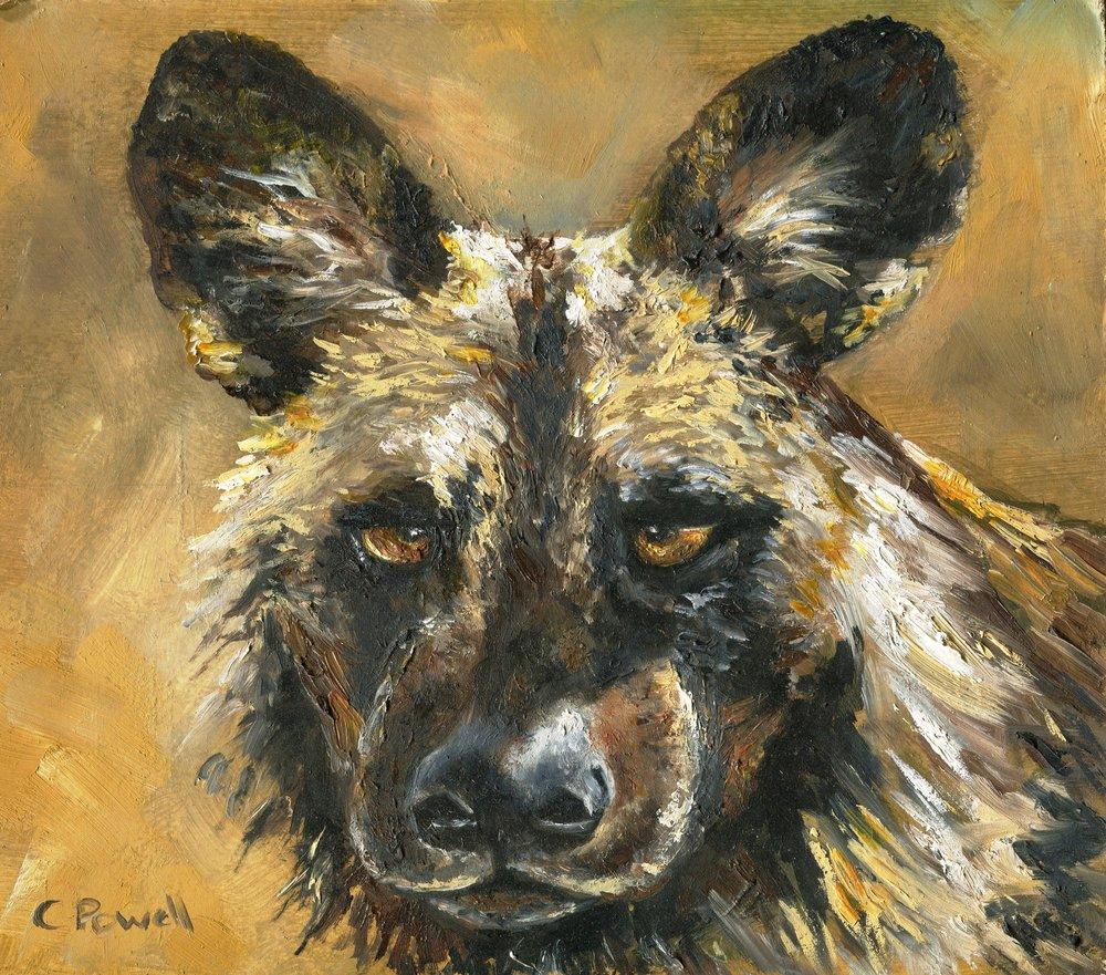 14b Cindy Powell, Wild Dog, Oil on board
