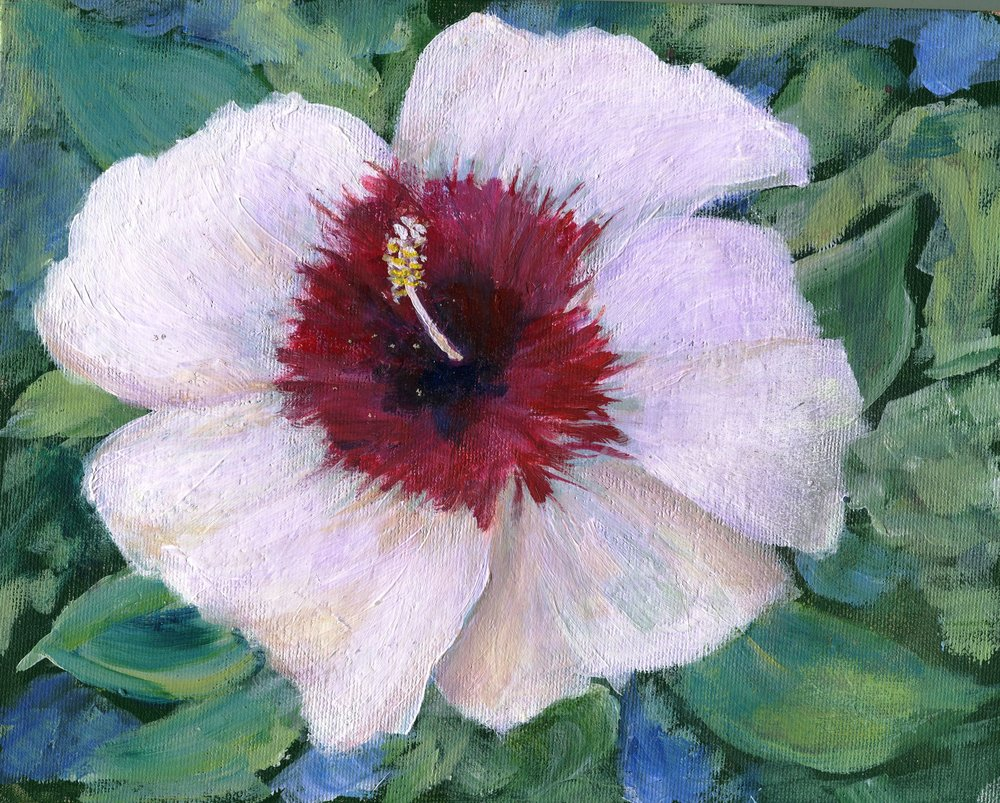 16a Patricia Torr,  Hibiscus, Acrylic on board