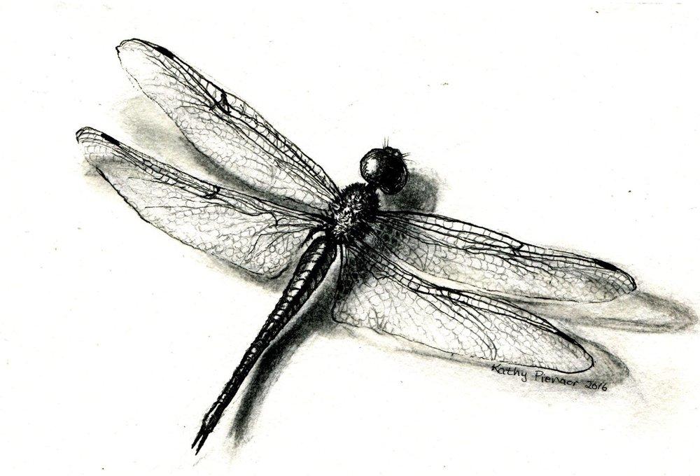 41b Kathy Pienaar,  Dragonfly, Pen & pencil on paper