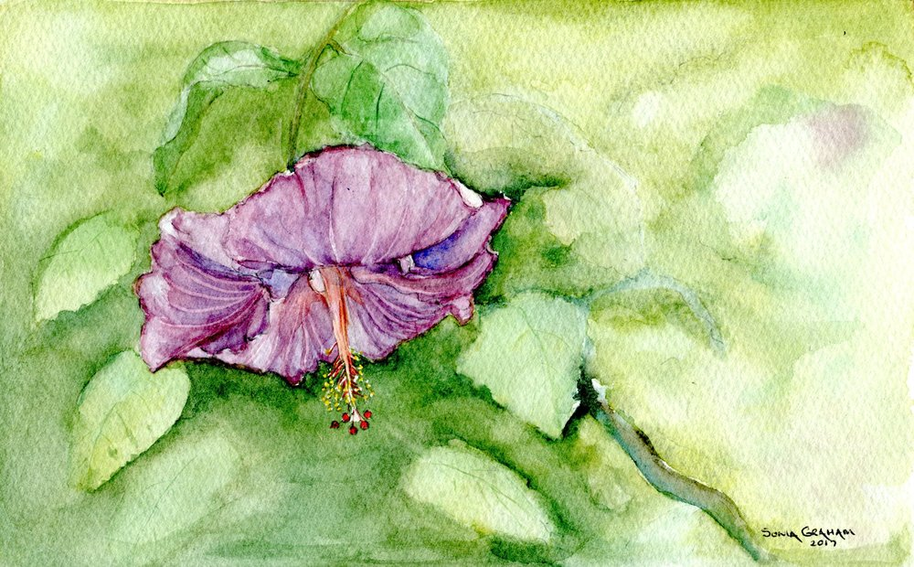 10A SONIA GRAHAM, 'BERRIED' TREASURE, WATERCOLOUR ON PAPER