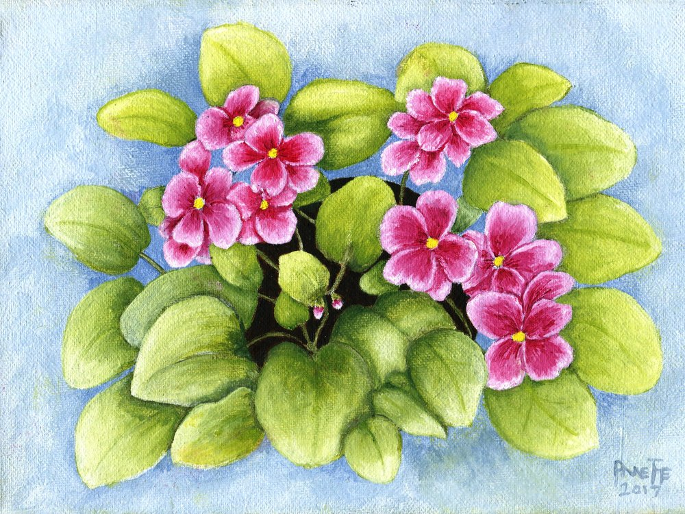 25C ANNETTE FARLAND, PINK AFRICAN VIOLET, OIL ON CANVAS
