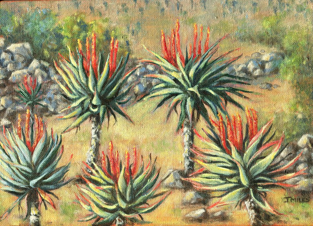 60A JENNY MILES, CREIGHTON VALLEY ALOES 1, OIL ON CANVAS