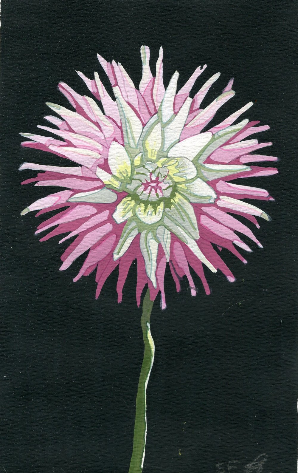 104C SUSAN FIRTH, DAHLIA SERIES II, GOUACHE ON PAPER