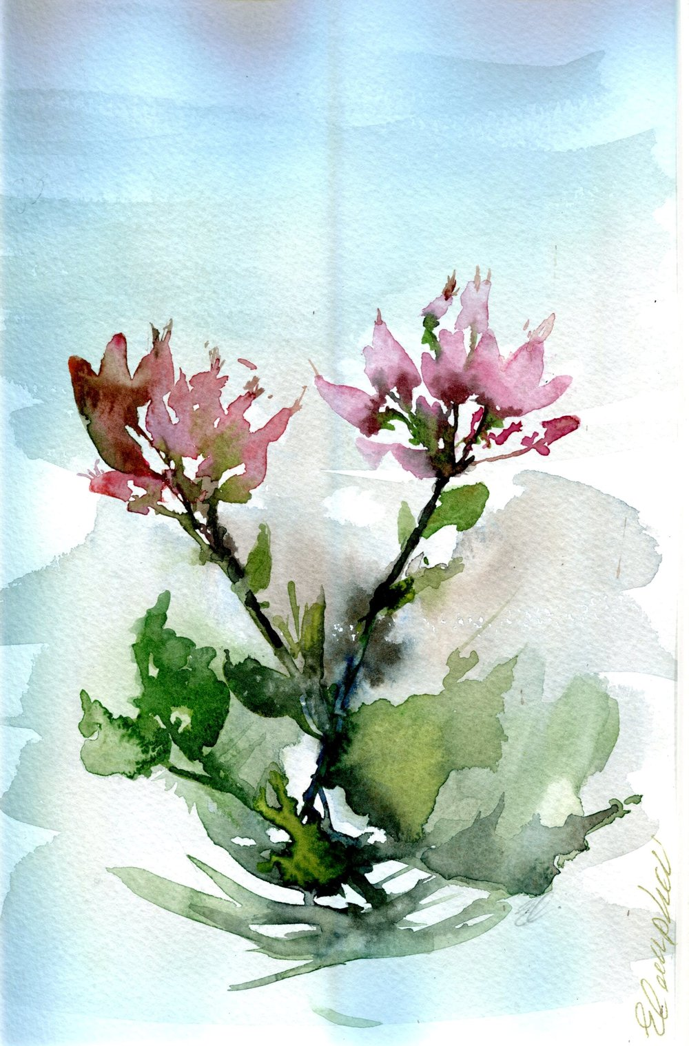 6A LIZ CAMPBELL, FLORAL STUDY, WATERCOLOUR ON PAPER