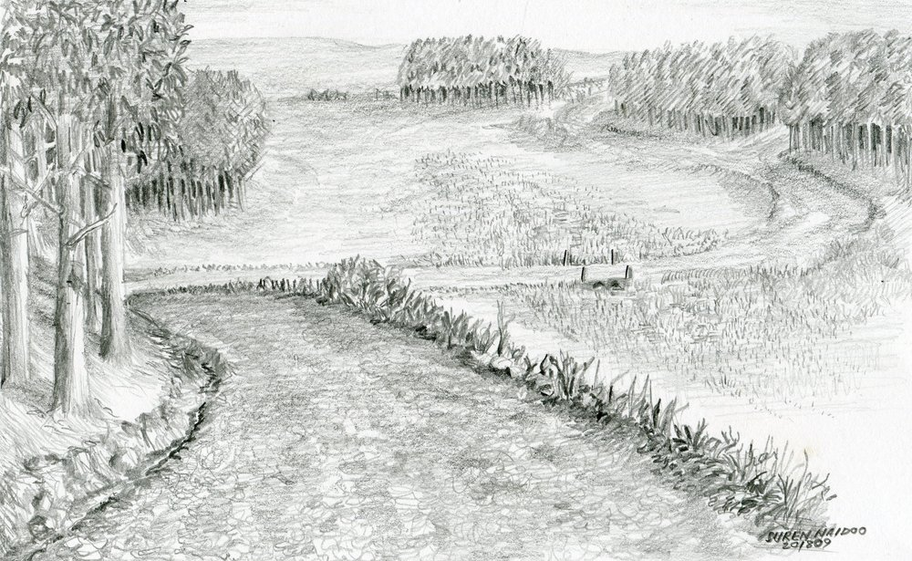 29A  Suren Naidoo  Vlei at Bloemhof  pencil on paper