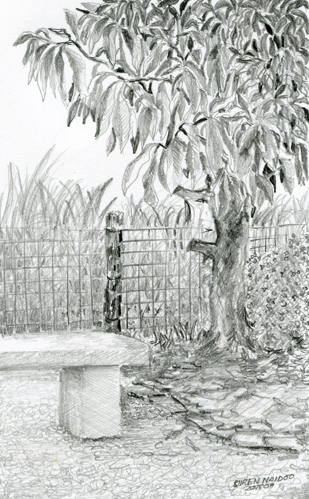 29B  Suren Naidoo  A quiet corner  pencil on paper