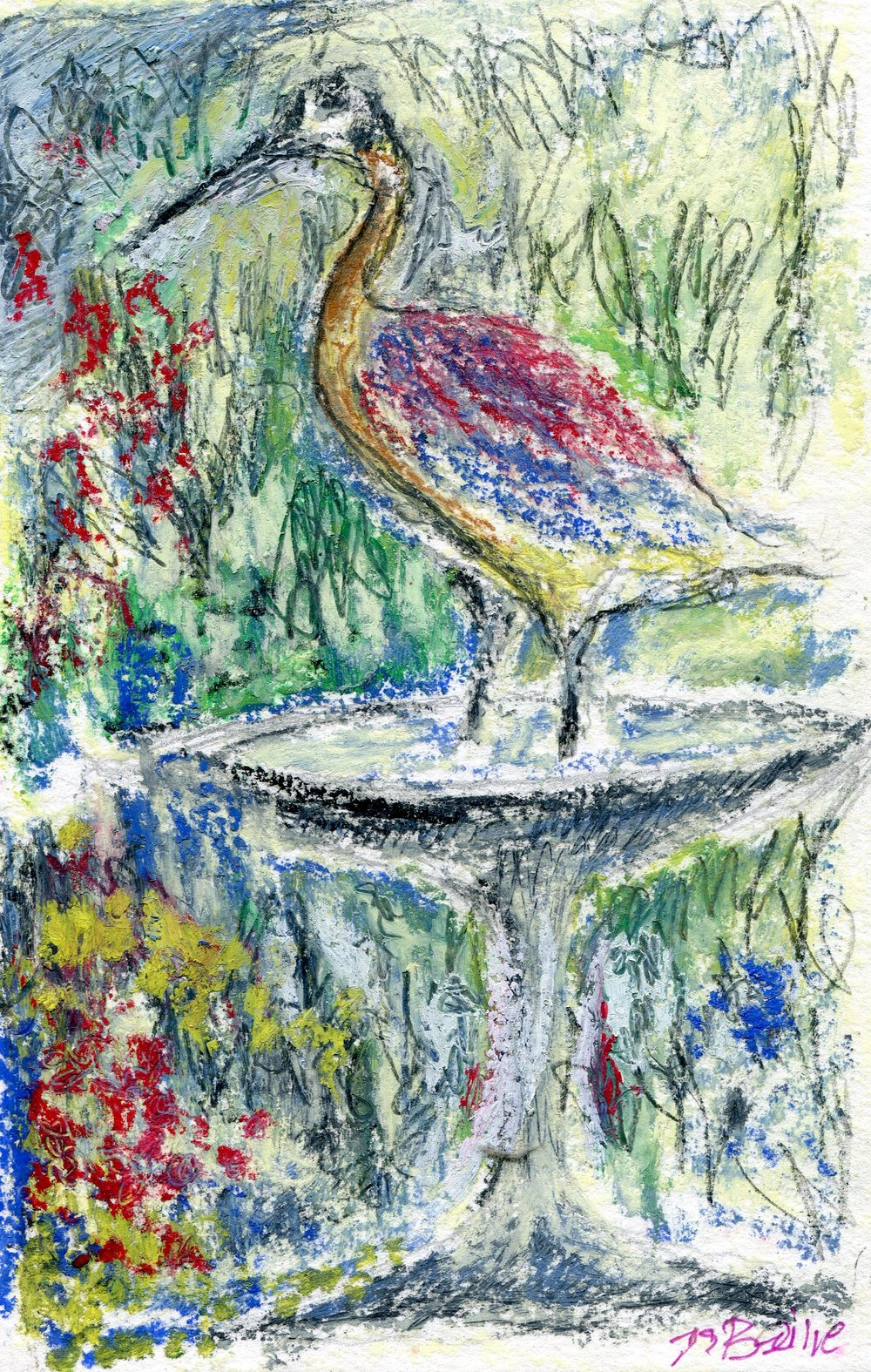 40a  Jean Stewart Bailie  Ibis refreshed 1  oil pastel on paper