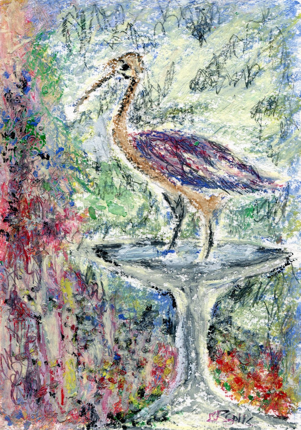 40b  Jean Stewart Bailie  Ibis refreshed 2  oil pastel on paper