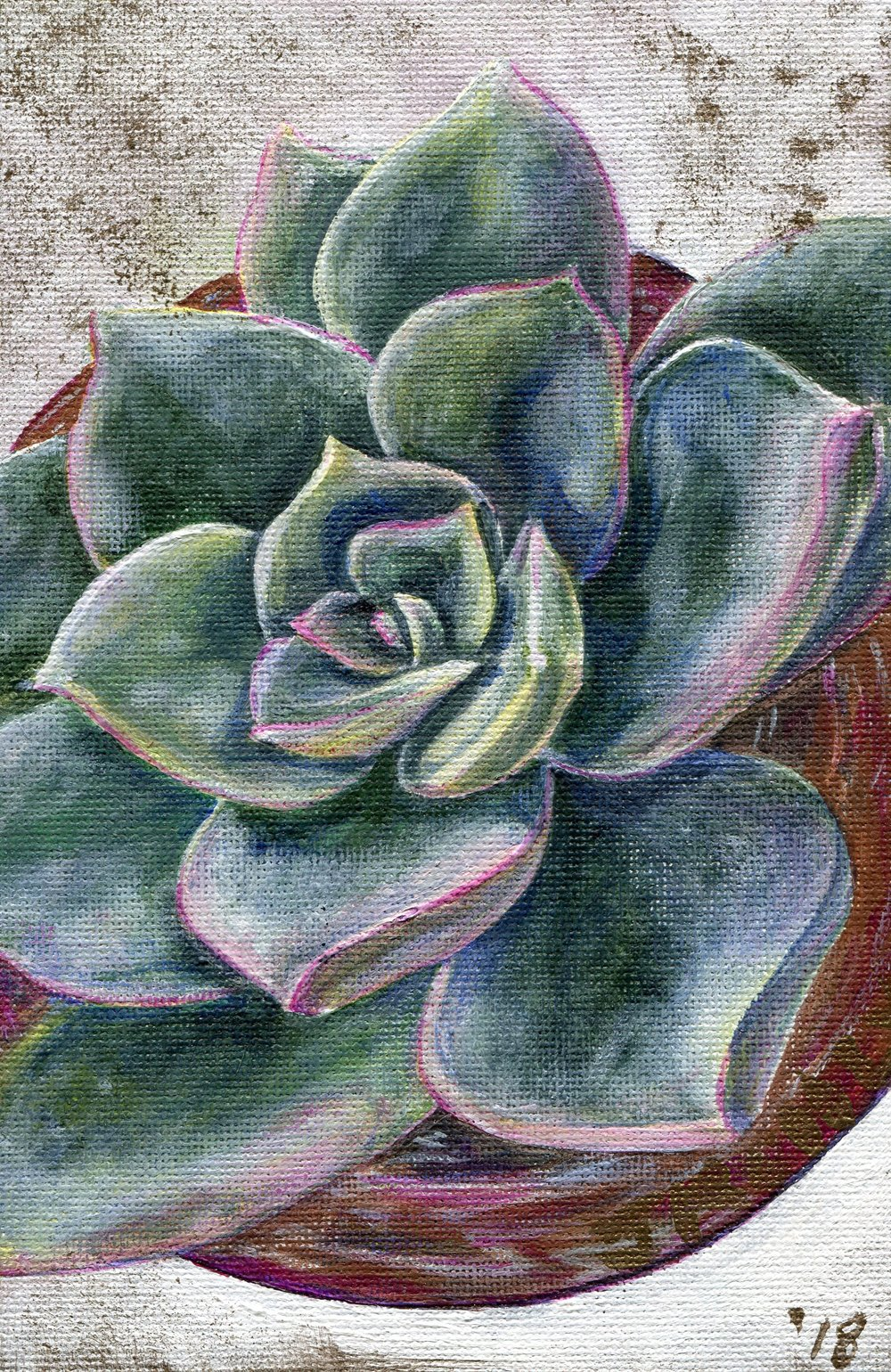 67a  Janeen Kohly  Echeveria I  acrylic on canvas