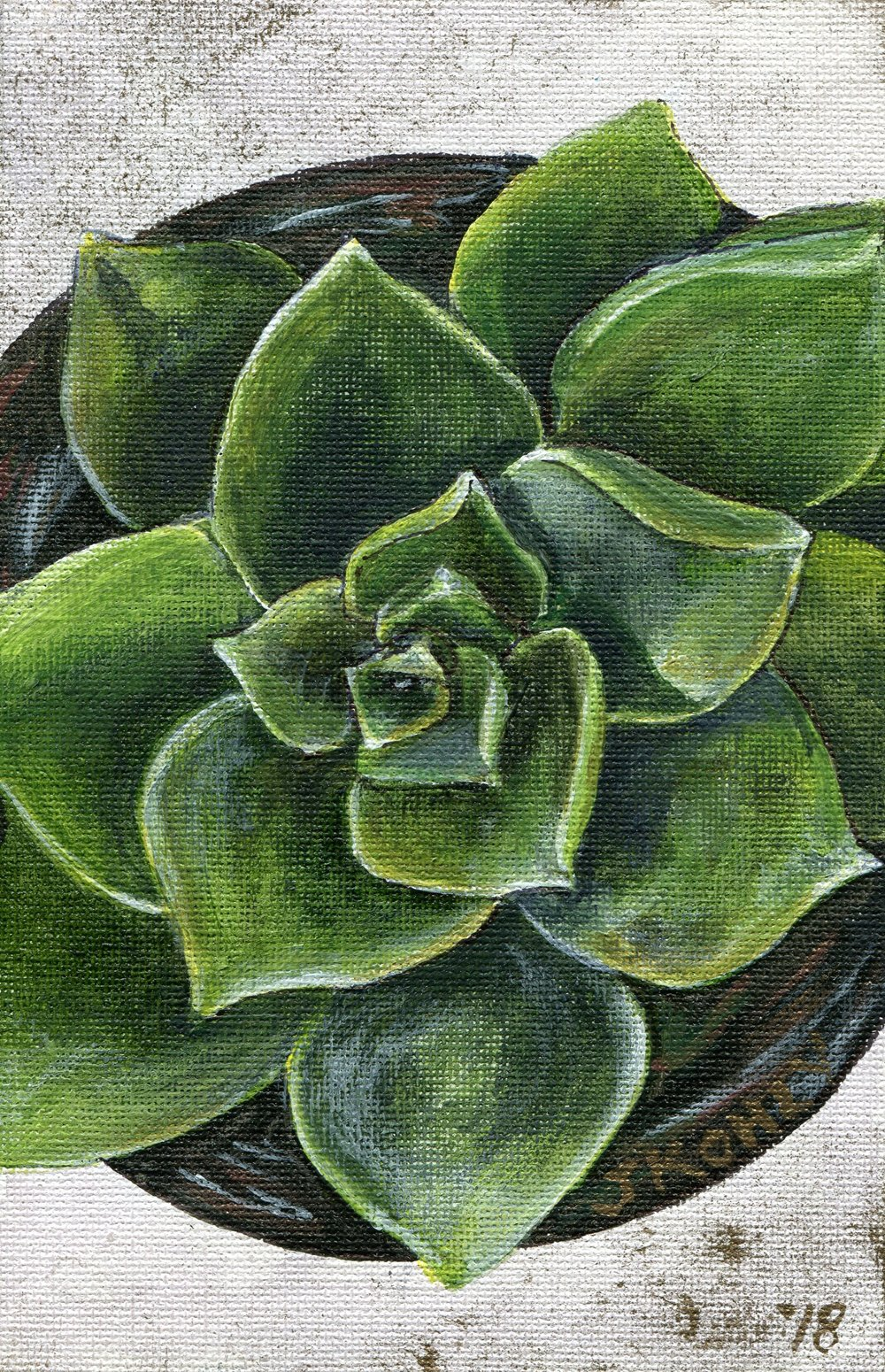 67b  Janeen Kohly  Echeveria II  acrylic on canvas