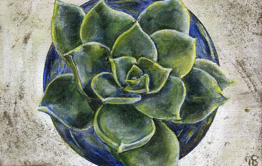 67c  Janeen Kohly  Echeveria III  acrylic on canvas