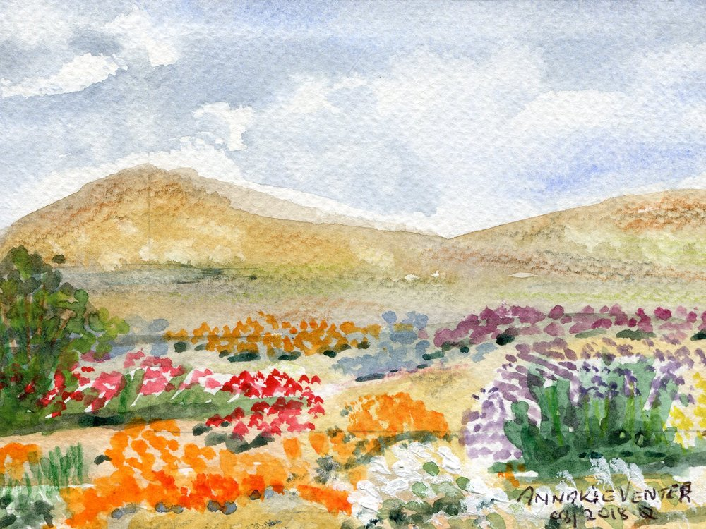 78a  Annakie Venter  Namakwaland  watercolour on paper