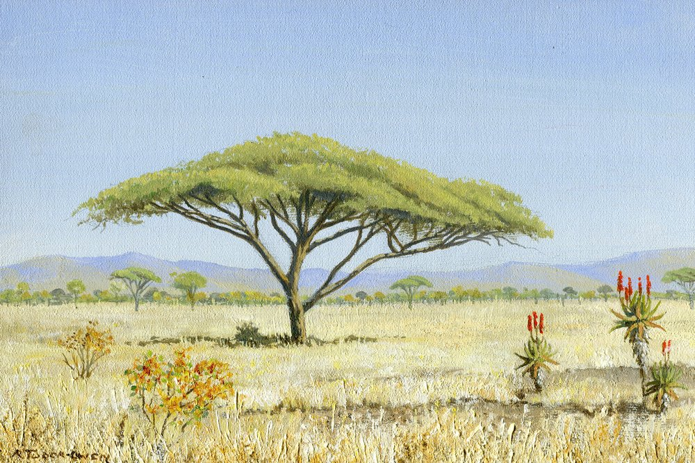 85b  Richard Tudor-Owen  Landscape with acacia  acrylic on canvas board