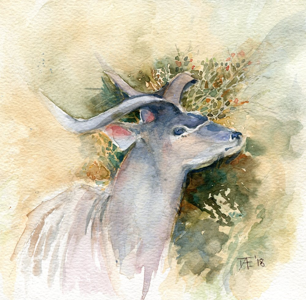 94b  Doret Ege  Kudu  watercolour on paper