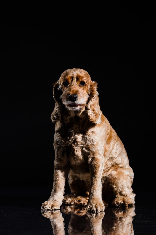 Mille-Hund-Kæledyr-3.jpg