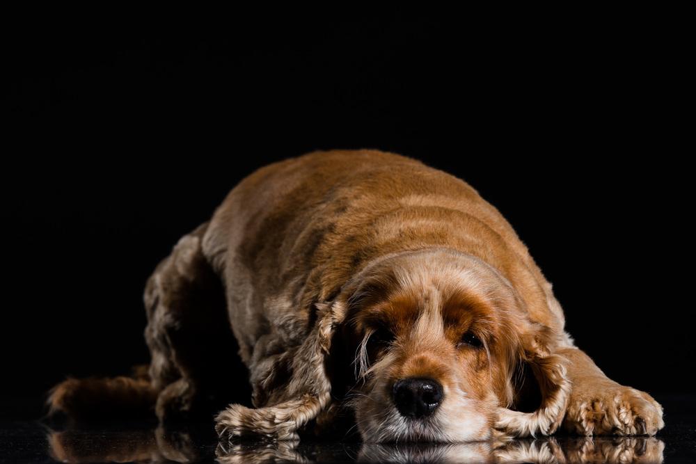 Mille-Hund-Kæledyr-6.jpg