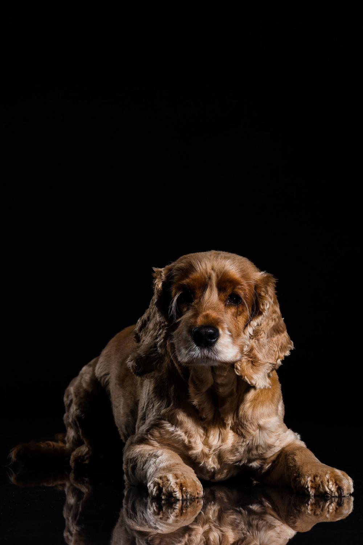 Mille-Hund-Kæledyr-7.jpg