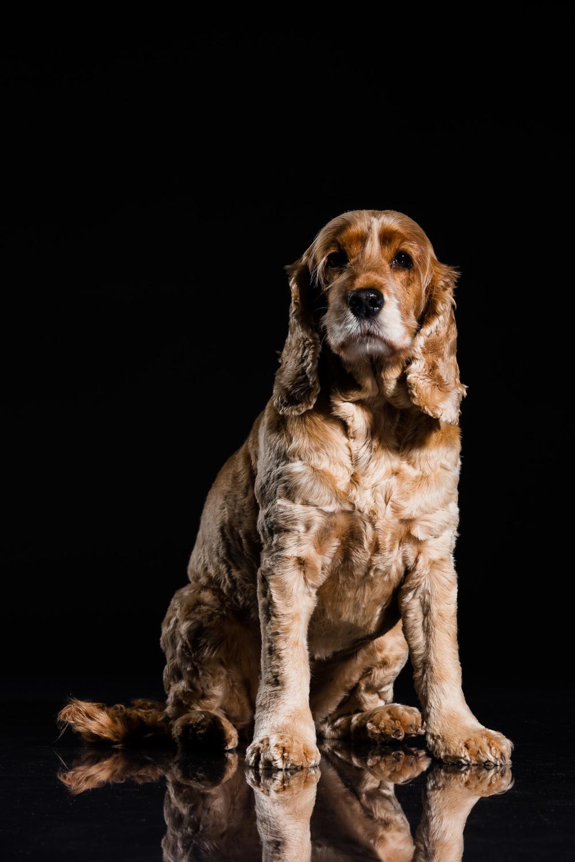 Mille-Hund-Kæledyr-4.jpg