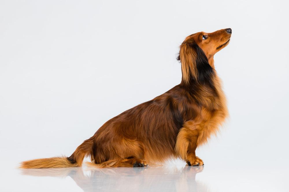 Hund-Milloup-Instagram-1.jpg