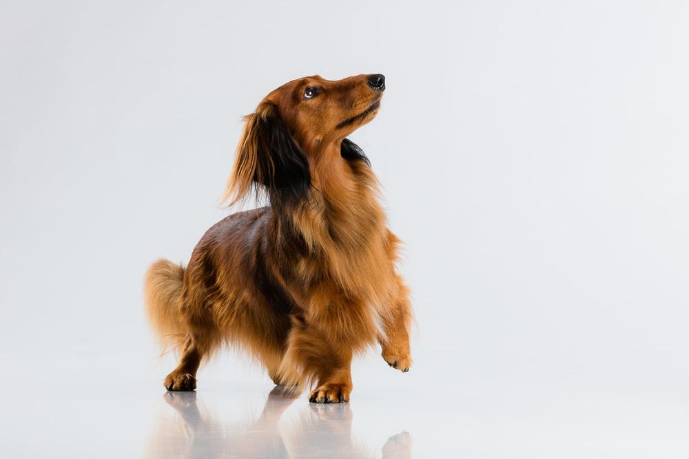 Hund-Milloup-Instagram-2.jpg