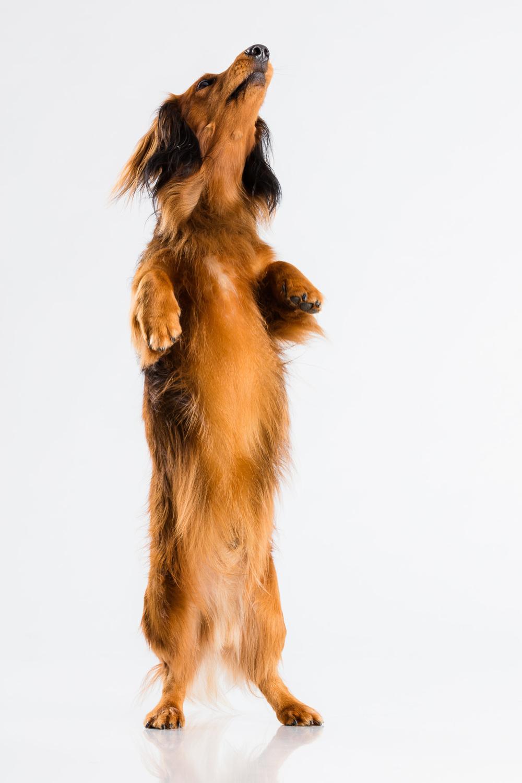Hund-Milloup-Instagram-14.jpg