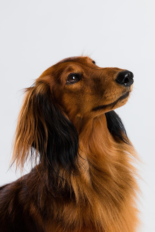 Hund-Milloup-Instagram-19.jpg