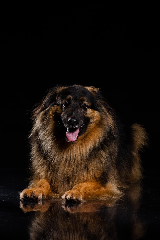 Hund-Valter-Instagram-1.jpg