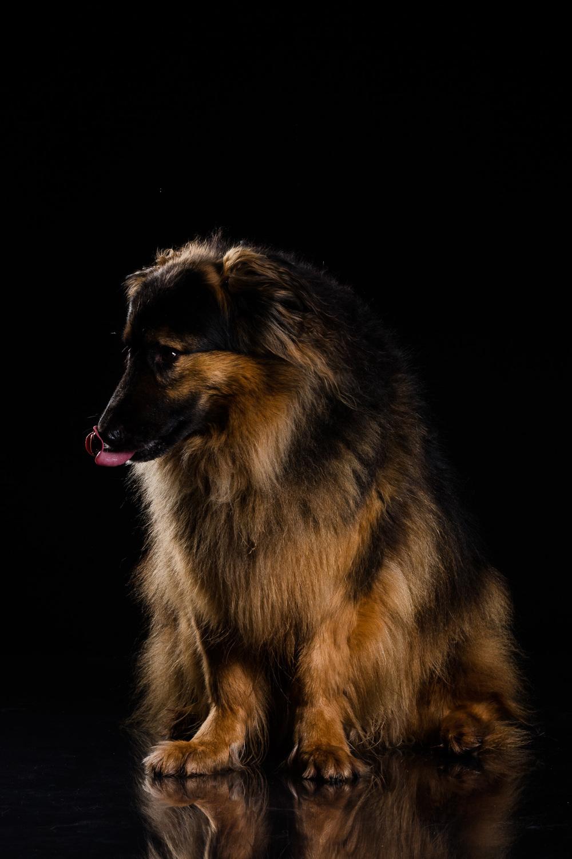 Hund-Valter-Instagram-3.jpg
