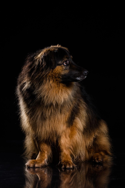 Hund-Valter-Instagram-4.jpg