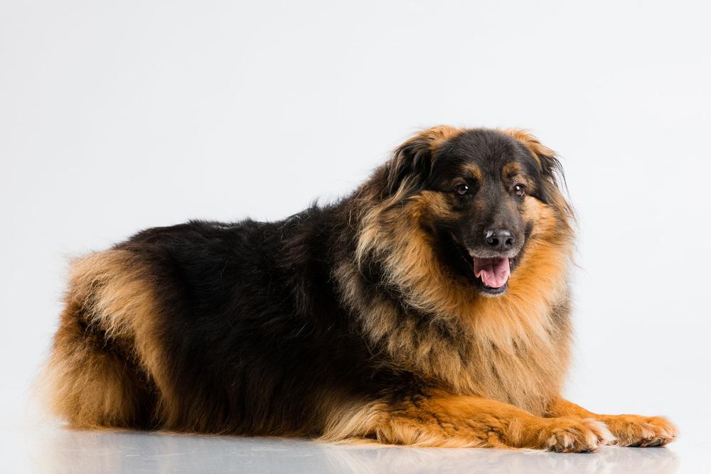 Hund-Valter-Instagram-8.jpg
