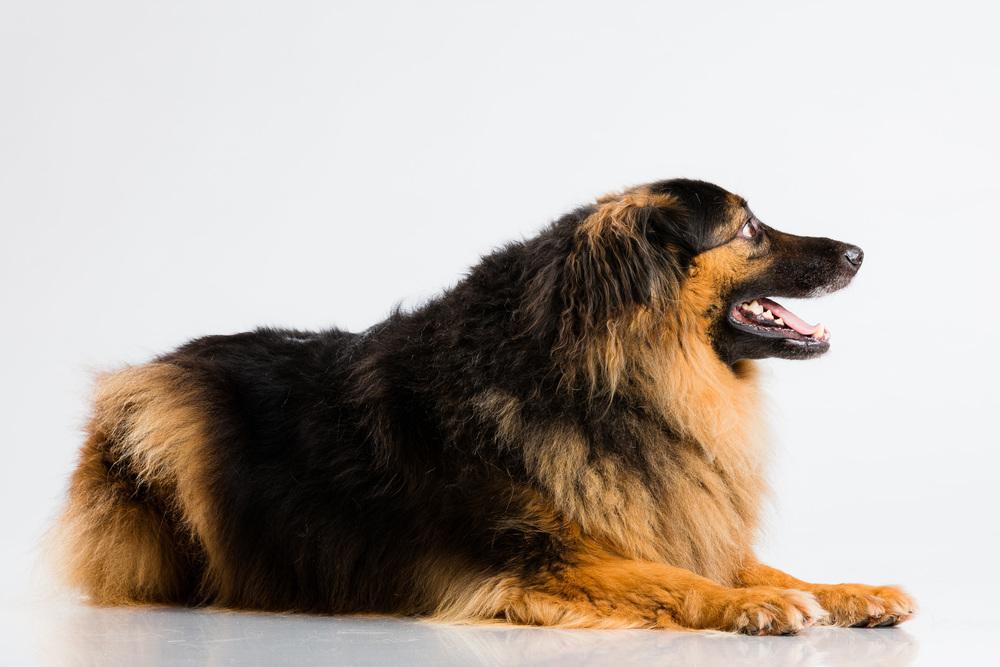 Hund-Valter-Instagram-9.jpg