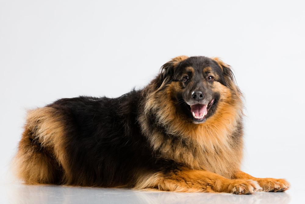 Hund-Valter-Instagram-10.jpg