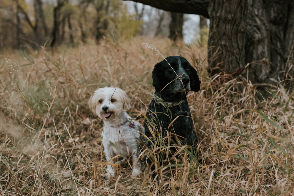 engagement-anniversary-dog-pictures-fall-18.jpg