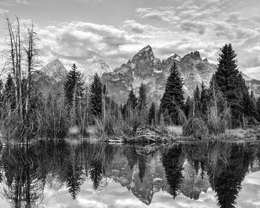 2nd Place Mono Open Large Print