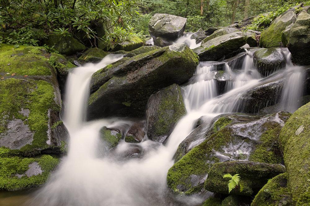 1001~COP~Smokey_Mountain_Creek~Zuidema~Bonnie~FVC.jpg