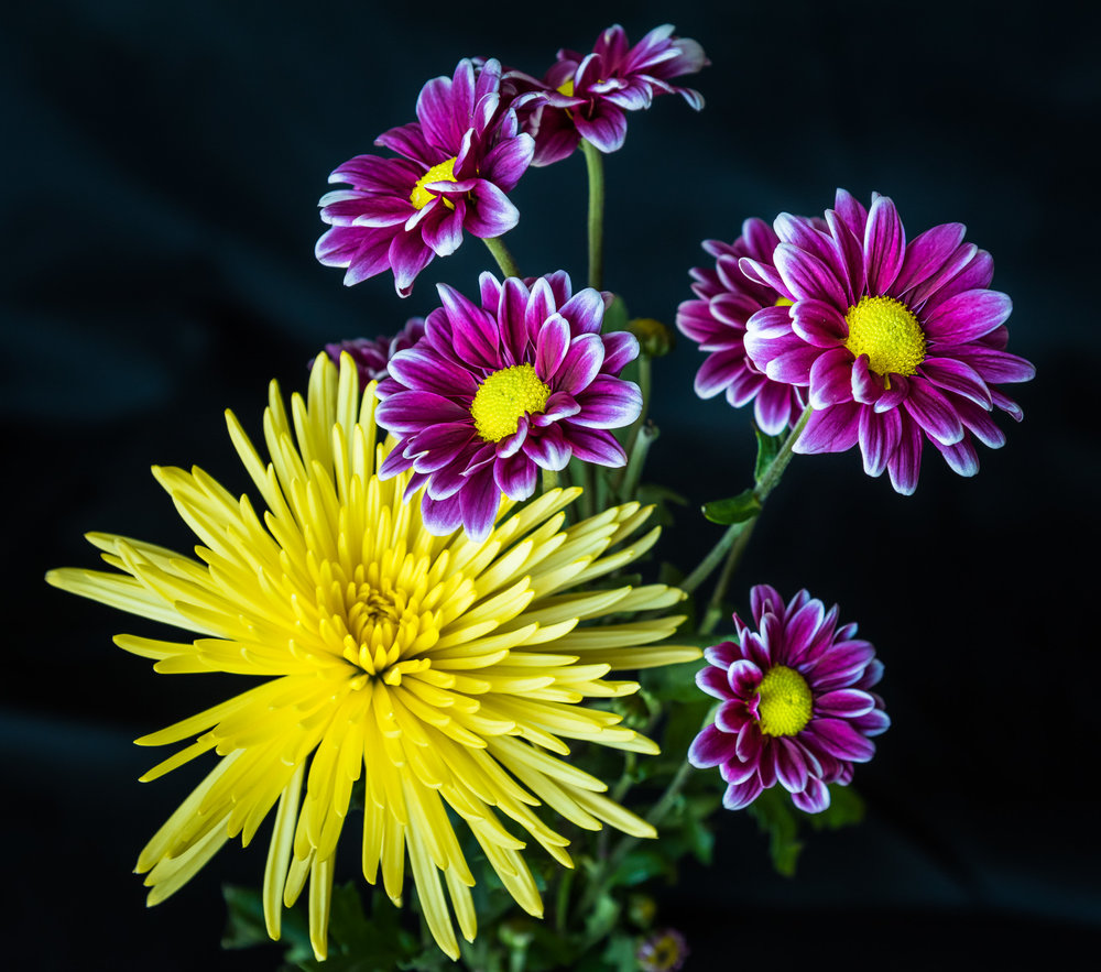 1203~COP~Spring_Flowers~Roach~John~MFC.jpg