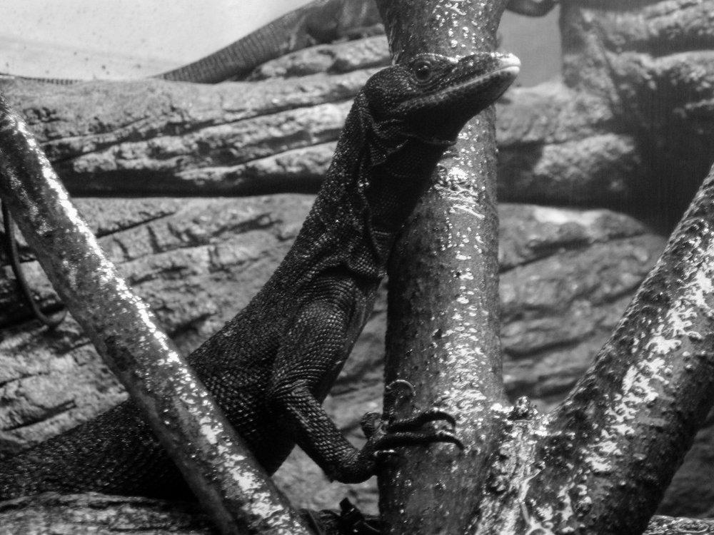 9329~MOP~Lizard~Baer~Ruth~PPM.jpg