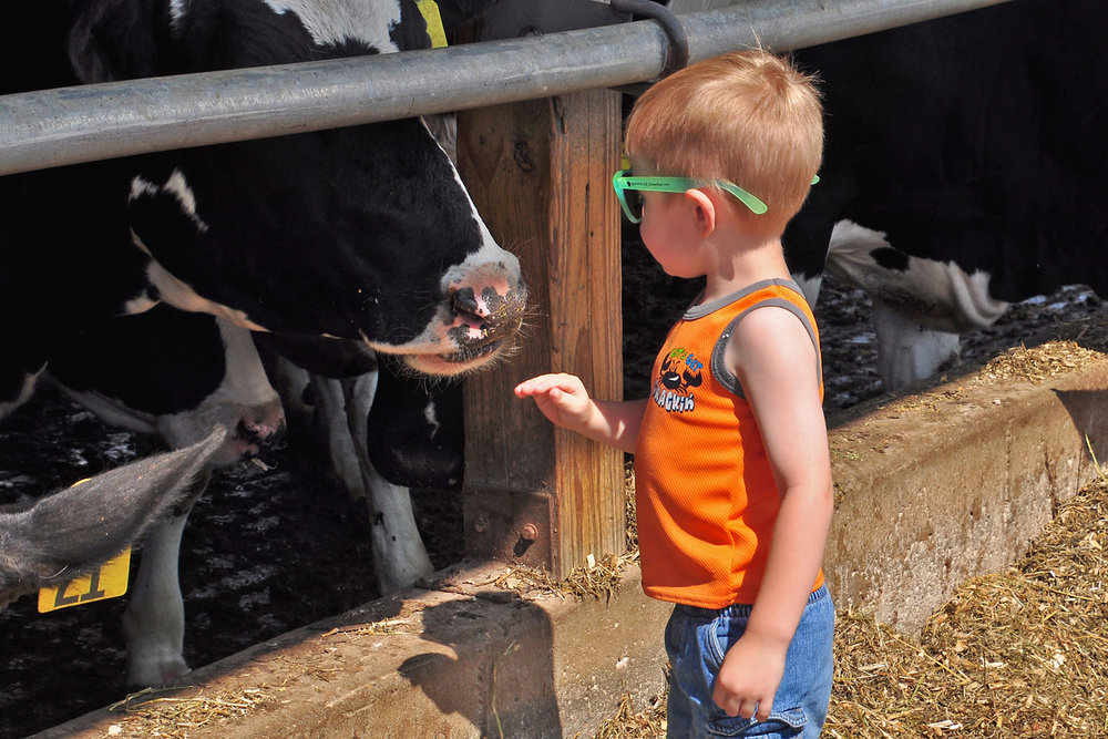 Hello Cow - Kay Biernasz
