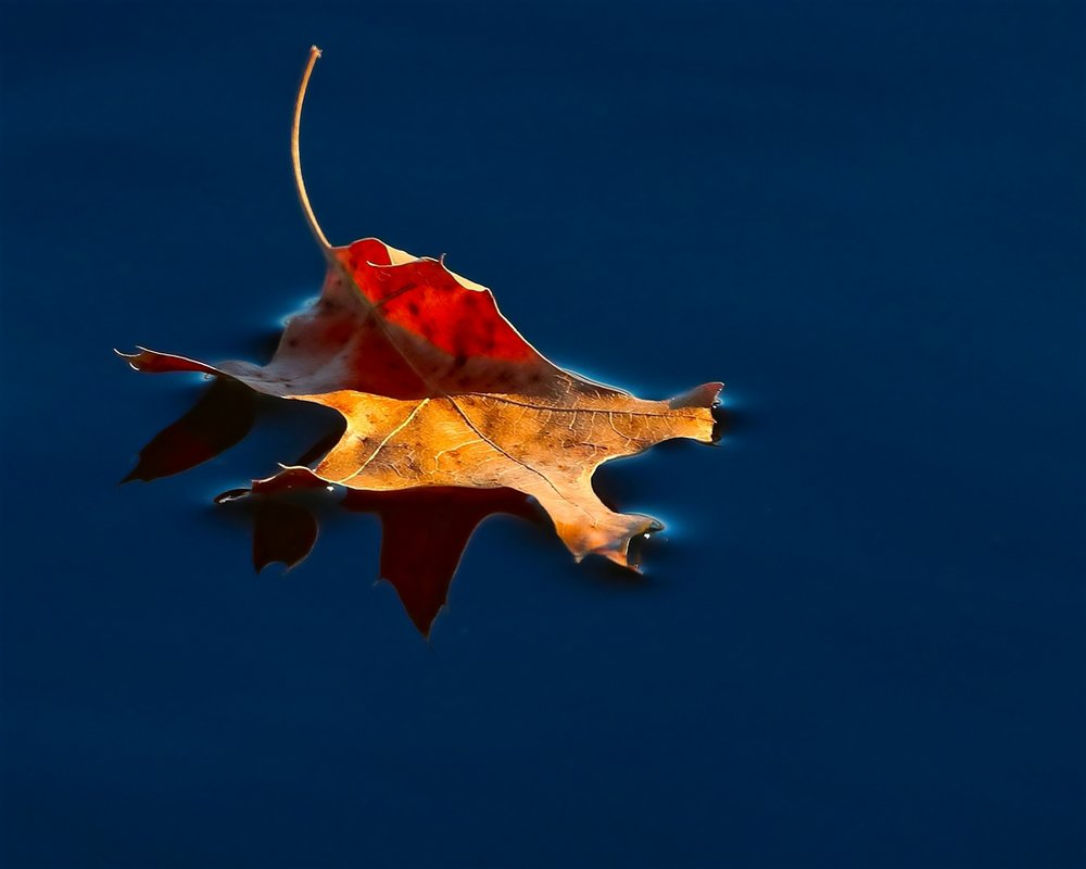 Leaf on Water - Marty Welter