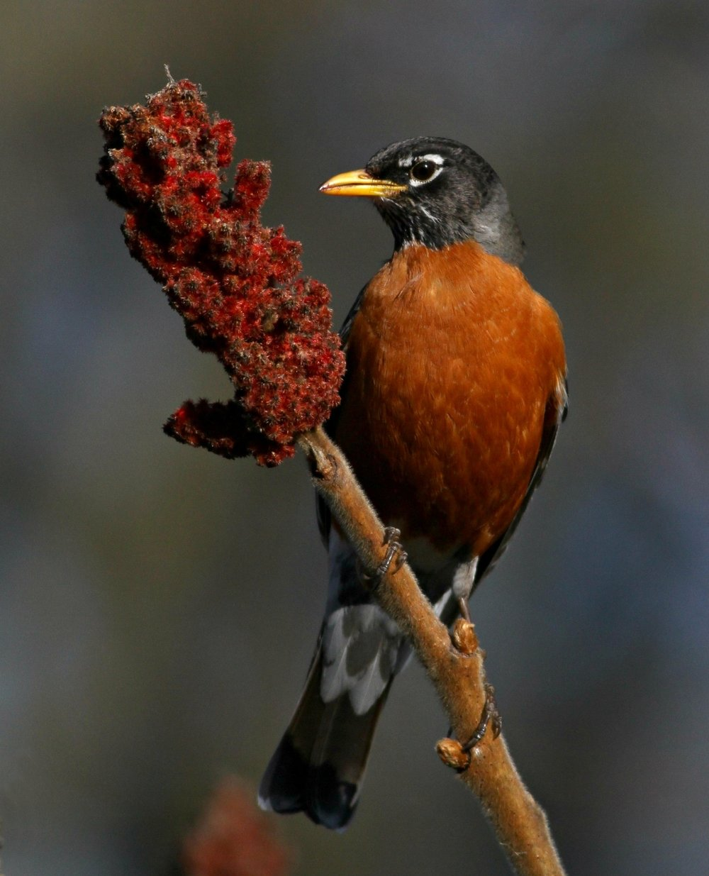 2nd Place~Robins Treat1019~Jim Edlhuber~Retzer Nature Center