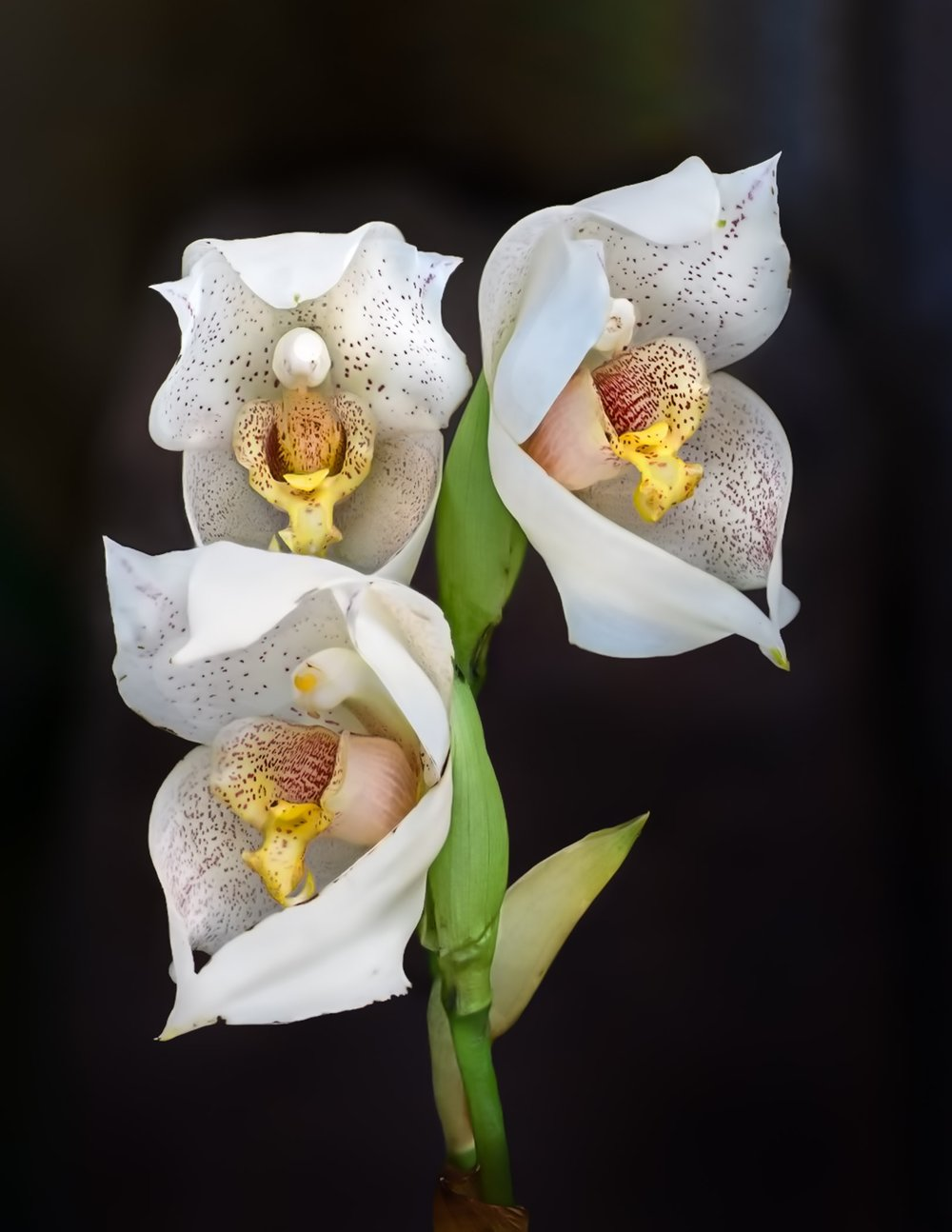 1st Place and Best Print~An Orchid-2~Jerry Clish~Fox Valley