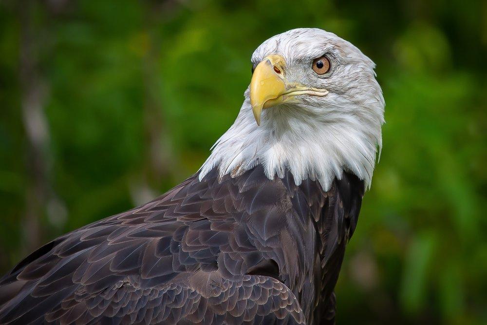 3rd place - American Eagle~Patrick Lynch - Menomonee Falls