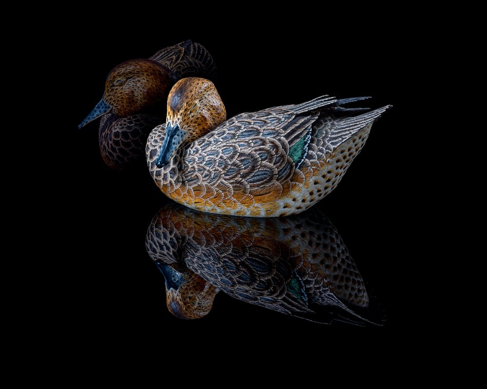 Best Print - Green Winged Teal Hen~Robert Hempeck - Unlimited Visions