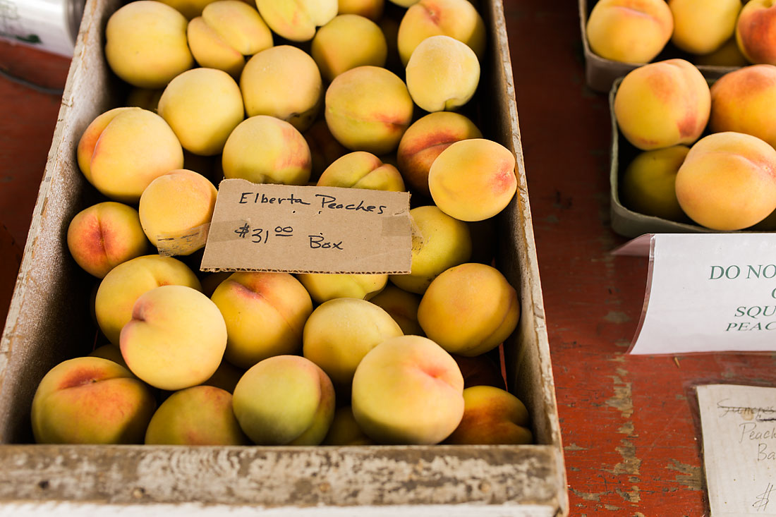 delicious peaches at a you pick farm in Keizer Oregon