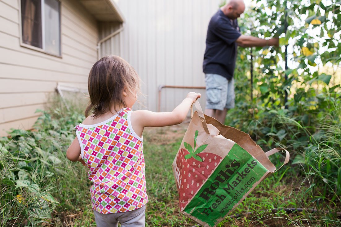 Dad and daughter picking vegetables from their garden