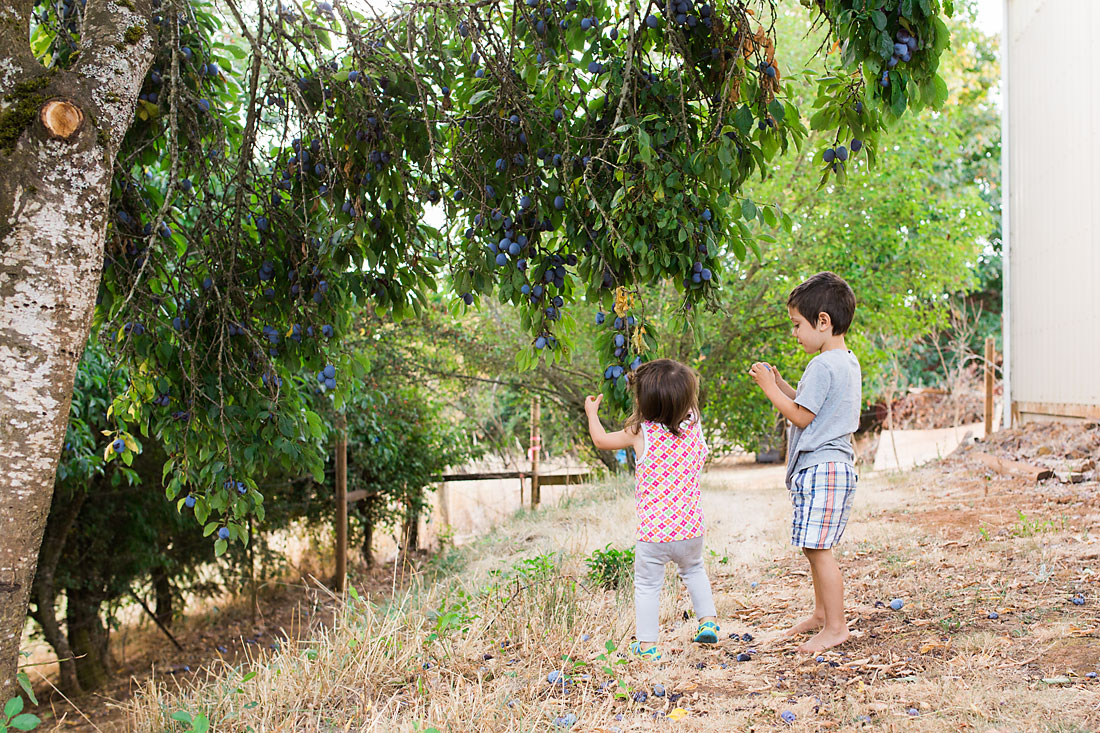 Family of three picking fruit in the country